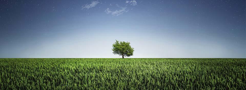 Árbol, Tree