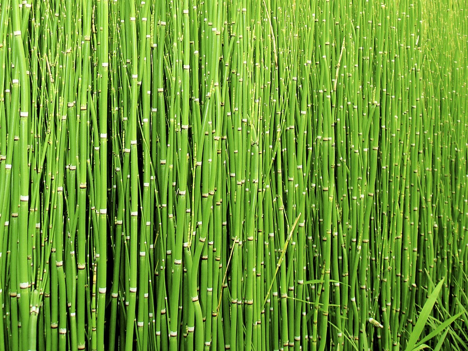 Horsetail Find Out The 5 Health Benefits Of This Plant