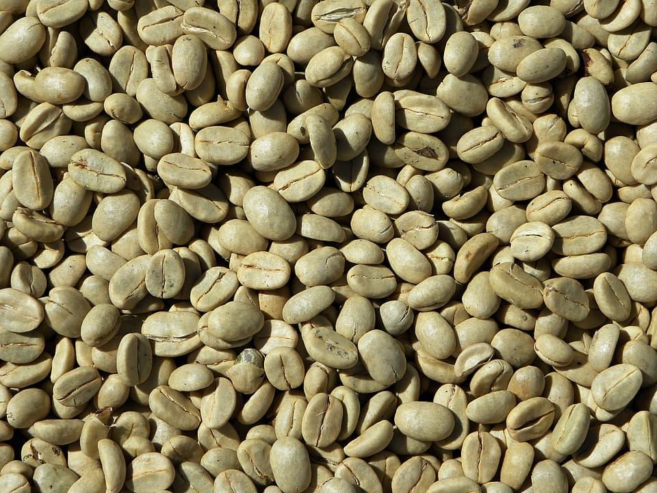 ¿Cuáles Son Las Diferencias Entre El Té Verde Y El Café Verde?